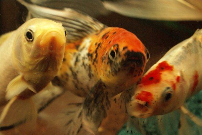 Das sind die Racker, die im Bad leben :-)