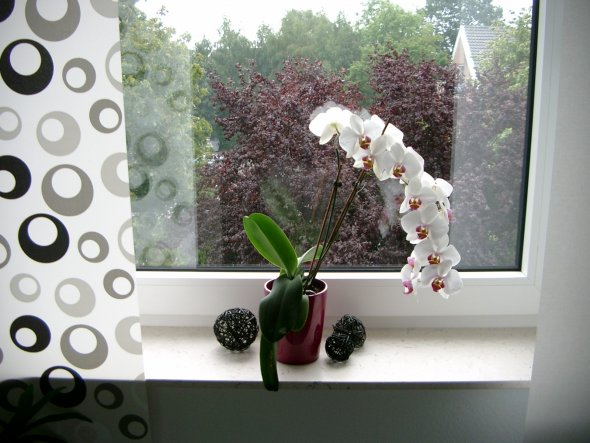 Auf der Fensterbank -alt-