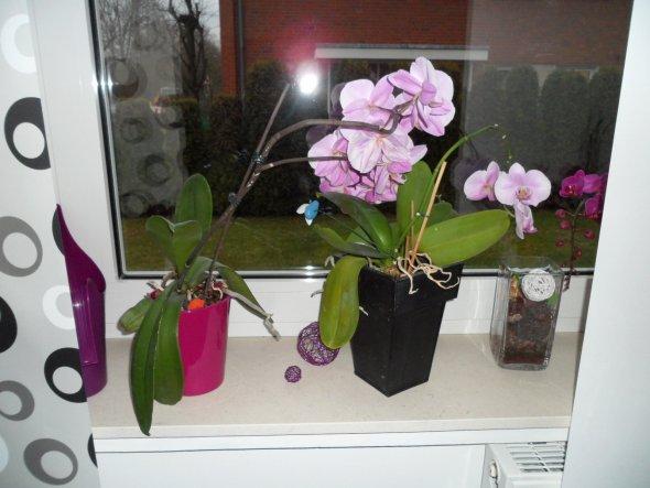 Wohnzimmer - Blumenfenster
