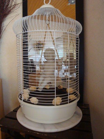 Der alte Vogelkäfig sollte schon auf den Sperrmüll....wäre doch schade gewesen...