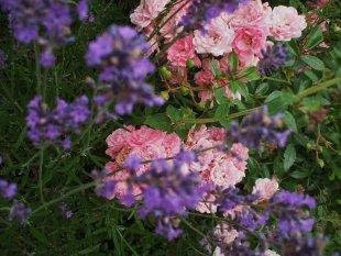 Hausfassade / Außenansichten 'vorgarten ...außenansicht'