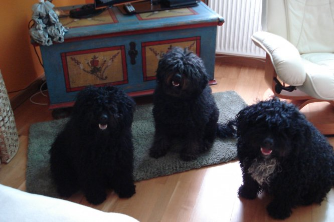 Haustiere 'Meine Hunde'