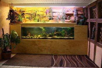 Aquariumzimmer