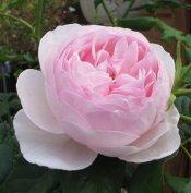 Fleur51
