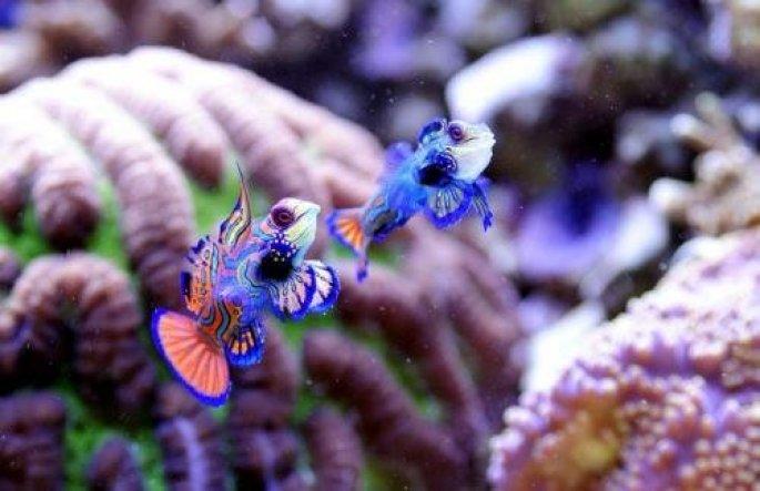 Haustiere 'Aquarium'