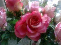 rosenfee2012