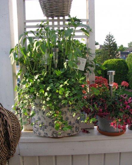 Terrasse / Balkon 'Mein kleiner Balkon...'