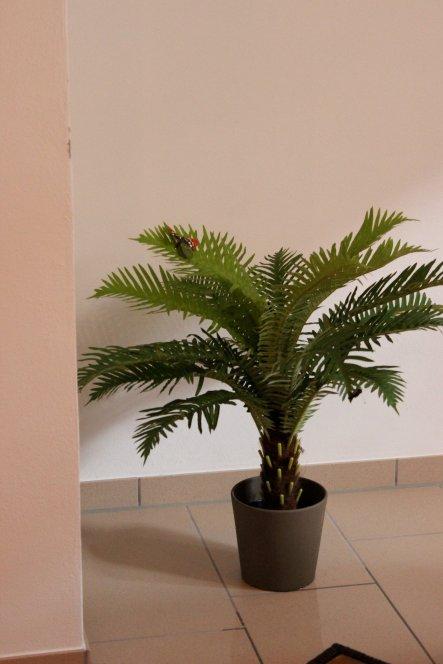 Pflanzen zum richtigen Feeling :)