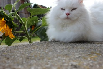 Haustiere 'Kater Max'
