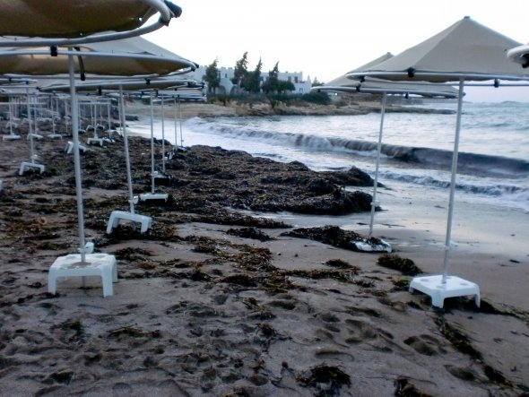 Strand mit Algen und Schlamm, und das 3 Tage lang ;o