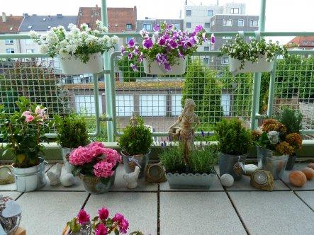 Terrasse / Balkon 'Balkon Juli 20141'