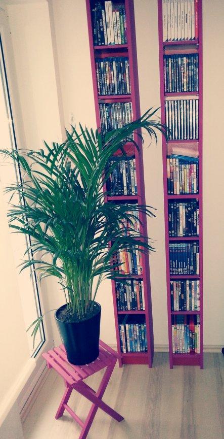 Ikea regale die vorher rot waren :-) Jetzt Pink