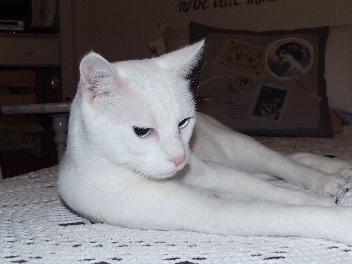 Haustiere 'Meine Katze Laila'