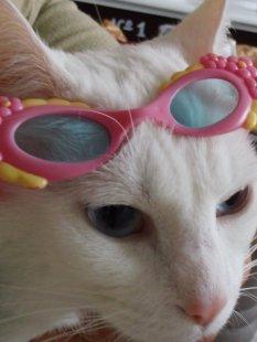 Meine Katze Laila