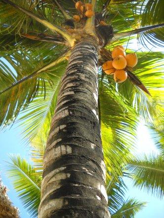 Unsere Ankunft in der Dominikanische Republik und unser erster Blick zu einer Kokospalme.