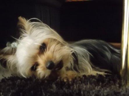 Haustiere 'Meine kleine Stella'