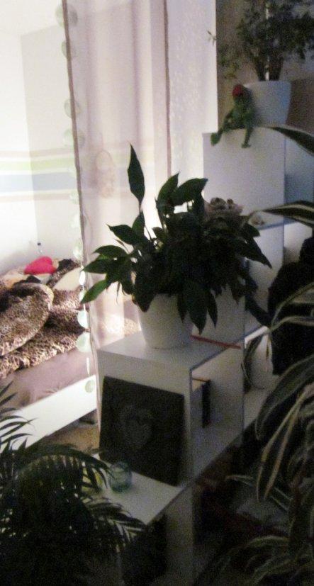 Schlafzimmer 'Schlafzimmer/Arbeitszimmer' - Alte Wohnung - Zimmerschau