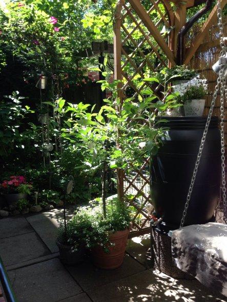 Das ist unser kleiner Apfelbaum im Topf. Der hat sogar drei Äpfel hervorgebracht. Ich liebe es im Garten zu werkeln und probiere alles aus. Das hier h