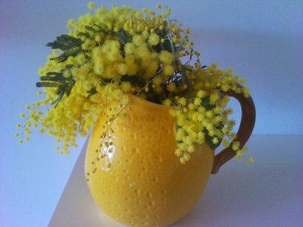 Mimosen...am schönsten in einer gelben Vase.