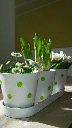 Pflanzen müssen in meiner Wohnung vorhanden sein, ohne die fehlt etwas Wichtiges.