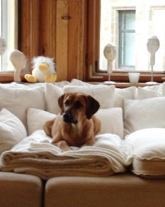Haustiere 'Mein Wohnzimmer'