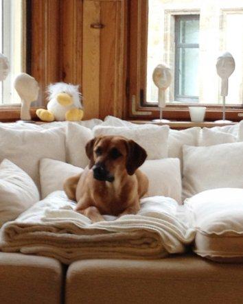 Mein Sofa, mein Hund.