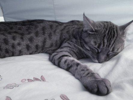 Haustiere 'Holly die Katze'