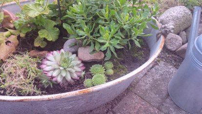 Daniel's Garten