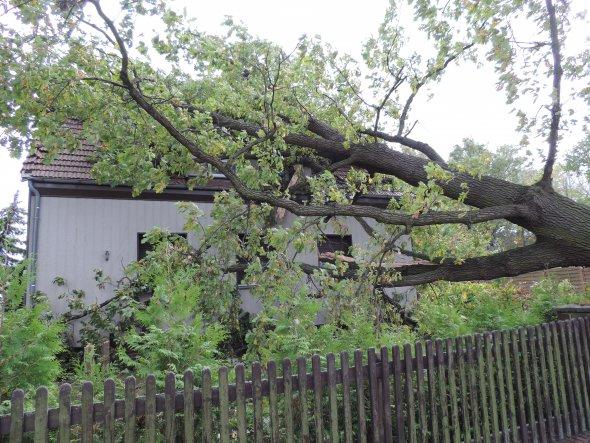 Leider fiel der Baum genau mittig auf das komplette Dach. Es ist nicht mehr zu retten.