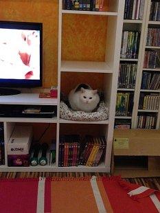 Exotisch 'Mein Wohnzimmer'