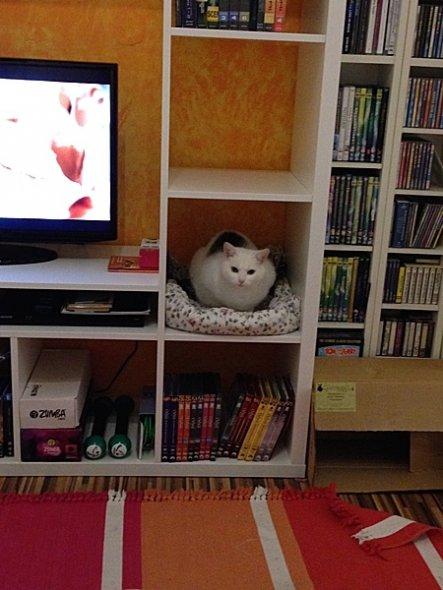 Auch die Katzen (es sind gleich 7) haben ihr Plätzchen im Regal gefunden!
