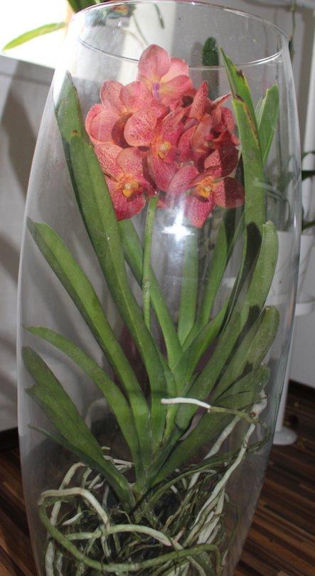 Deko 'Orchideenparadies'