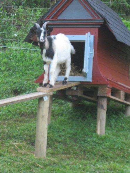 Garten 'Meine kleine Farm'