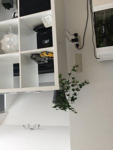 Der Efeu darf jetzt schön wachsen und einige Kabel und Stecker verdecken. Laut Feng Shui wirkt er positiv belebend und motiviert :)