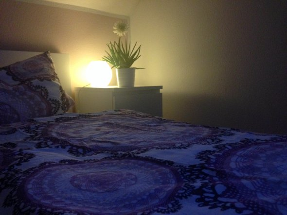Aloe Vera stärkt das Immunsystem und eignet sich super für´s Schlafzimmer.