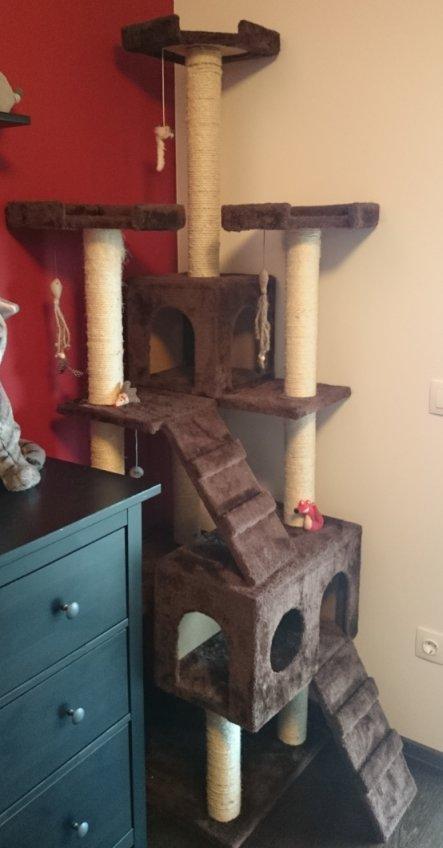 Die Katzen lieben ihren Kratzbaum.
