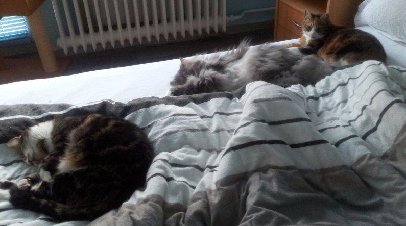 Tja,was gibt es da noch zu sagen.Frauchen schläft halt im Wohnzimmer auf der Couch.Grins..nein natürlich nicht.