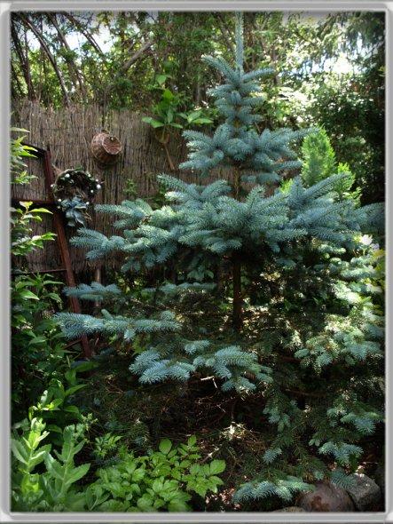 Unsere Besucher sind der Meinung, es sieht in unserem Garten, wie im Märchenwald aus.....man hat das Gefühl , in jeder Ecke lauert ein Zwerglein....