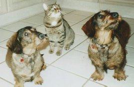 Zimmerschauerin katzenrech