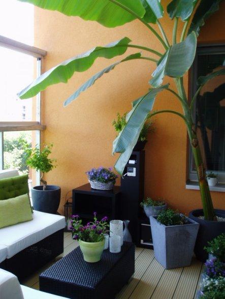 Terrasse / Balkon 'Oase'