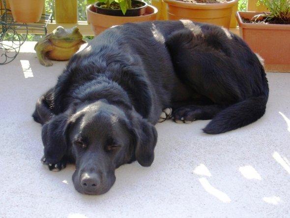 Unser 6jähriger Nicco ist ein hervorragender Wachhund und Spielgefährte meiner Kinder