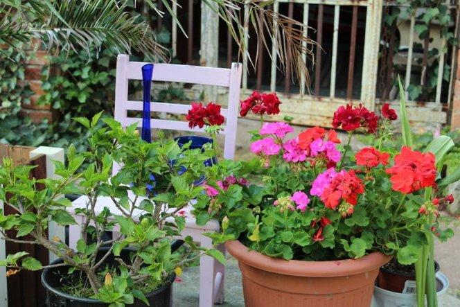 Innenhof - Blumen vor dem Hundezwinger