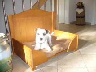 Tipp & Trick 'Hundebett'