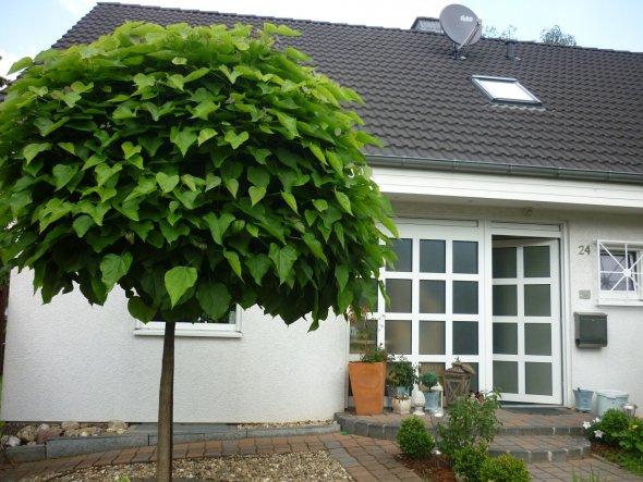 Hausfassade / Außenansichten 'Vorgarten aktuell'