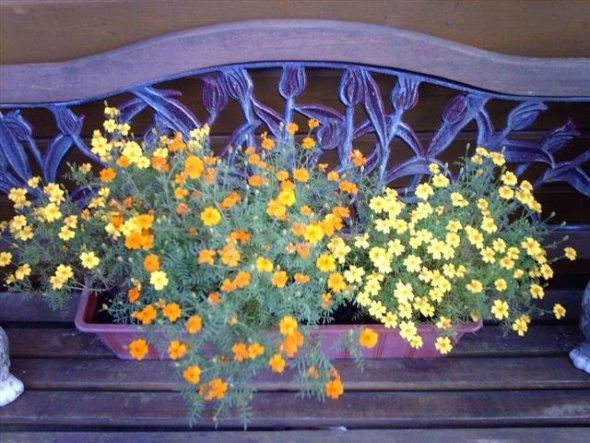 Terrasse / Balkon 'Gartenterrasse'