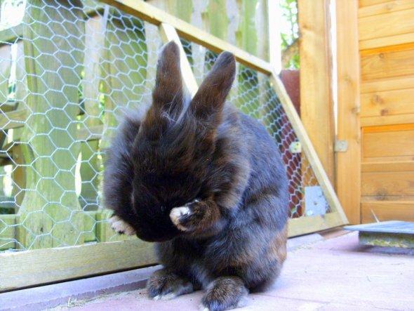 Haustiere 'Kaninchenleben'
