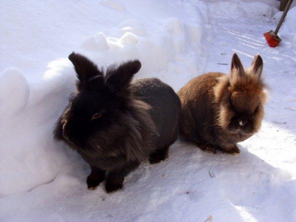 Die beiden finden den Schnee ganz toll!