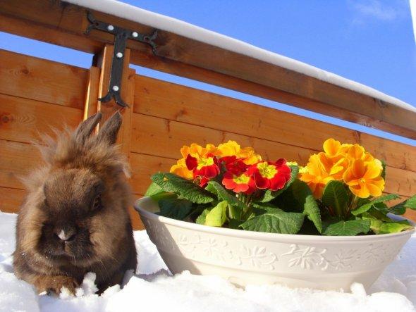 Teddy möchte Euch auf den Frühling einstimmen!