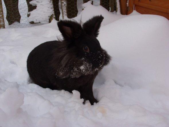 Die Puschi im Schnee