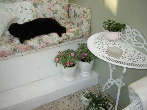Terrasse / Balkon 'neues sommerzimmer 2009'